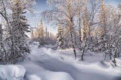 Obraz Зимняя лесотундра