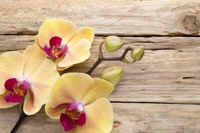 Obraz Yellow orchid.