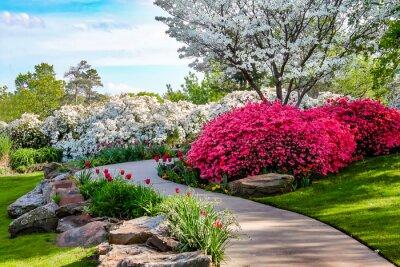 Obraz Zakřivené cesty přes břehy Azeleas a pod dříny s tulipány pod modrou oblohou - Krása v přírodě