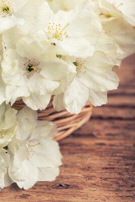 Obraz Zblízka bílého květu třešní v koši ve vrcholném stylu