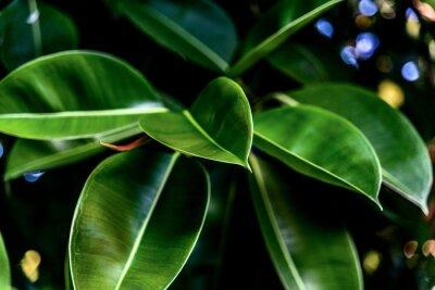 Obraz Zelená čerstvé listy
