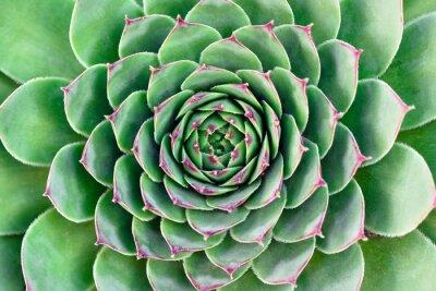 Obraz zelená květina