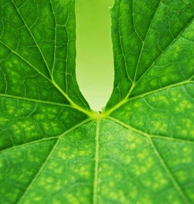 Obraz Zelená listová pozadí