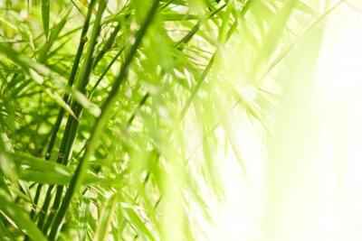Obraz Zelené bambusové pozadí