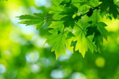 Obraz zelené listy