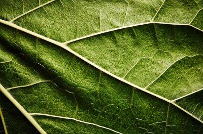 Obraz Zelený list