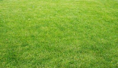 Obraz Zelený trávník