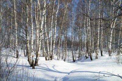 Obraz Zimní krajina s bílým bříza