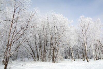 Obraz Zimní les