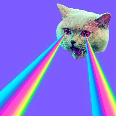 Zlá kočka s duhovými lasery z očí. Minimální koláž módní koncept
