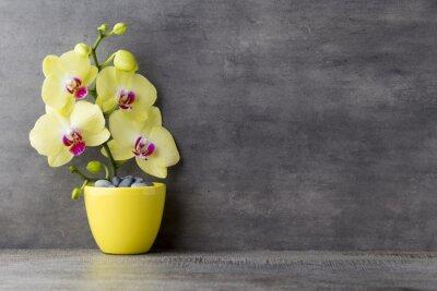 Obraz Žlutá orchidej na šedém pozadí.