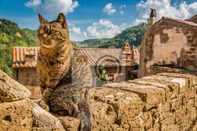 Zvědavá kočka na kamenné zdi ve městě