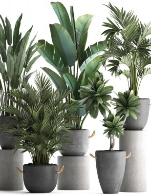 Plakát 3d illustration of tropical plants on white background