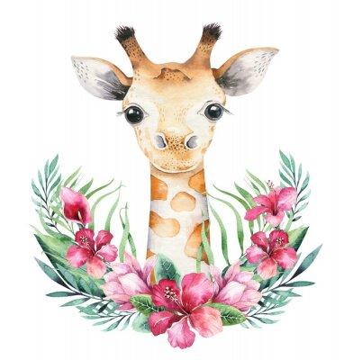 Plakát A poster with a baby giraffe. Watercolor cartoon giraffetropical animal illustration. Jungle exotic summer print.