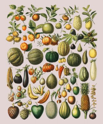 Plakát A vintage illustration of a wide variety of fruits and vegetables from the book, Nouveau Larousse Illustre (1898), by Larousse, Pierre, Augé and Claude, Digitally enhanced by rawpixel.