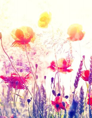 Plakát Abstract blurred nature background, summer meadow at sunrise.