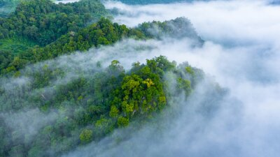 Plakát Aerial view of morning mist at tropical rainforest mountain, background of forest and mist, Aerial top view background forest.