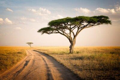 Plakát African Landscape - Tanzánie