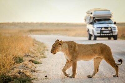 Plakát africké safari