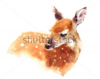 Plakát Akvarel Baby Deerrawn malované Fawn Ilustrace izolované na bílém pozadí