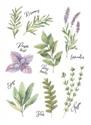Plakát Akvarel ilustrace. Plakát s botanickými zelenými listy, bylinkami a větvemi. Prvky květinového designu. Ideální pro svatební pozvánky, blahopřání, blogy, výtisky, pohlednice