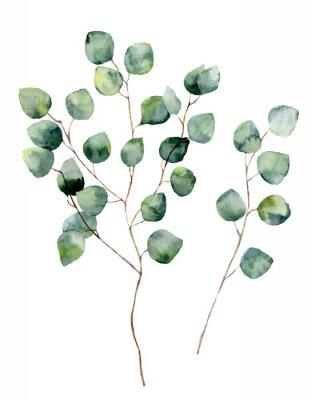 Plakát Akvarel stříbrný dolar eukalyptus s kulatými listy a větve. Ručně malované eukalyptu prvky. Květinové ilustrace na bílém pozadí. Pro design, textilní a pozadí.