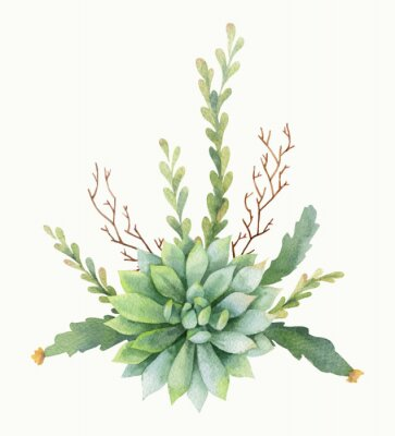 Plakát Akvarel vektorové kytici kaktusů a sukulentních rostlin izolovaných na bílém pozadí.