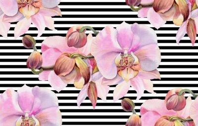 Plakát Akvarelové květiny. Růžové orchideje