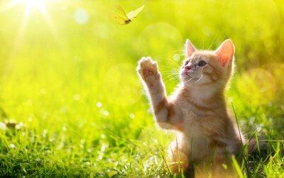 Plakát art Young cat / kotě lov motýl s podsvíceným