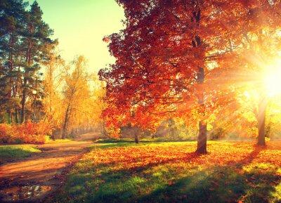 Plakát Autumn scene. Fall. Stromy a listí ve slunci