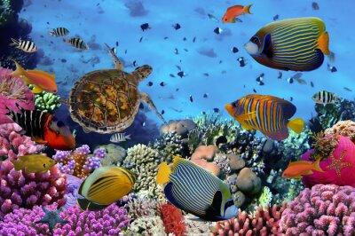 Plakát barevné korálový útes s množstvím ryb