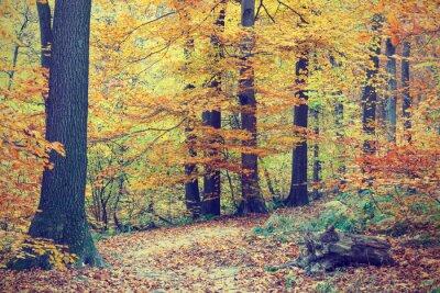 Plakát Barevné podzimní stromy v lese, vintage vzhled