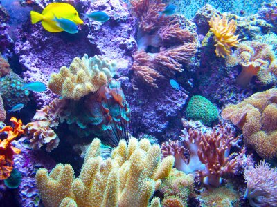Plakát Barriera Corallina 2
