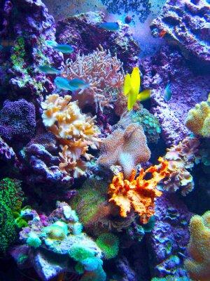 Plakát Barriera Corallina
