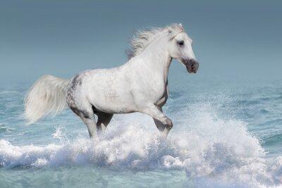 Plakát Bílá arabský kůň běh cval ve vlnách v oceánu