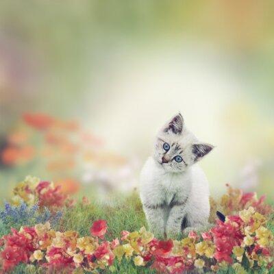 Plakát Bílé Kotě v květiny