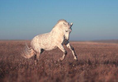 Plakát Bílý kůň běh