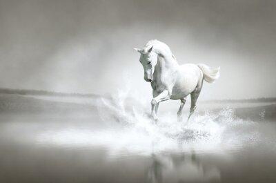 Plakát Bílý kůň běží přes vodu