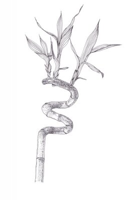 Plakát Black ink dots drawing sketch of bamboo branch isolated on white background. Hand drawn illustration of beautiful bamboo brunch spiral with leaves.