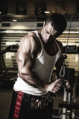 Plakát Bodybuilder trains the muscles in the gym