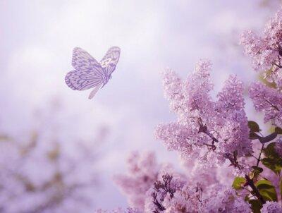 Plakát Butterfly a květiny