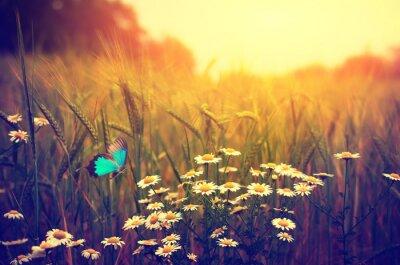 Plakát Butterfly létání jarní louka sedmikráska květiny