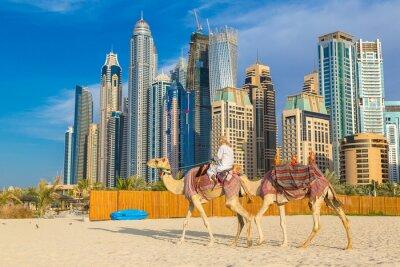Plakát Camel v Dubaj Marina