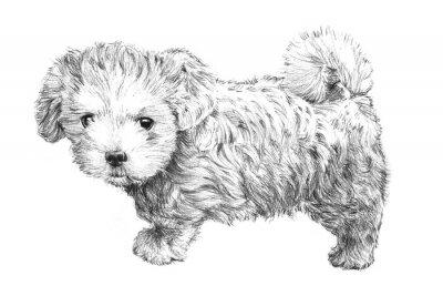 Plakát černé a bílé ručně kreslenými štěně obraz, roztomilé štěně pes skica na bílém pozadí pro veterináře, pet salonu krásy, veterinární péči o zvířata nebo internetový obchod Vizitka kliparty, brožury rekl