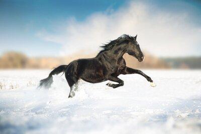 Plakát Černý kůň běh ve sněhu