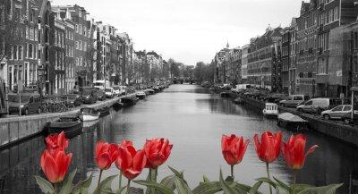 Plakát červené tulipány v Amsterdamu