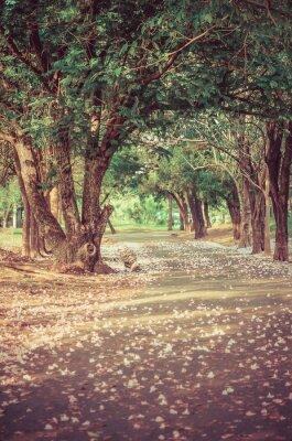 Plakát Cesta pod stromem tunelu s květinami ve vintage atmosféře