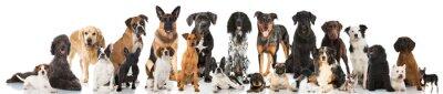 Plakát Chovné psy