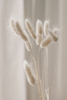 Plakát Close-up of beautiful creamy dry grass bouquet. Bunny tail, Lagurus ovatus plant against soft blurred beige curtain background. Selective focus. Floral home decoration. Vertical.