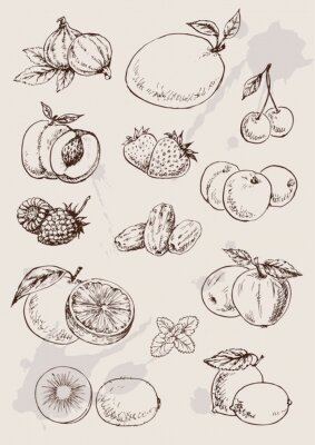 Plakát collection of  hand drawing isolated  fruits